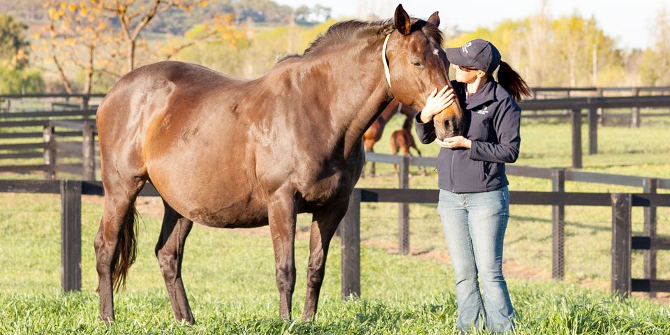 Laminitis in the Pregnant Mare